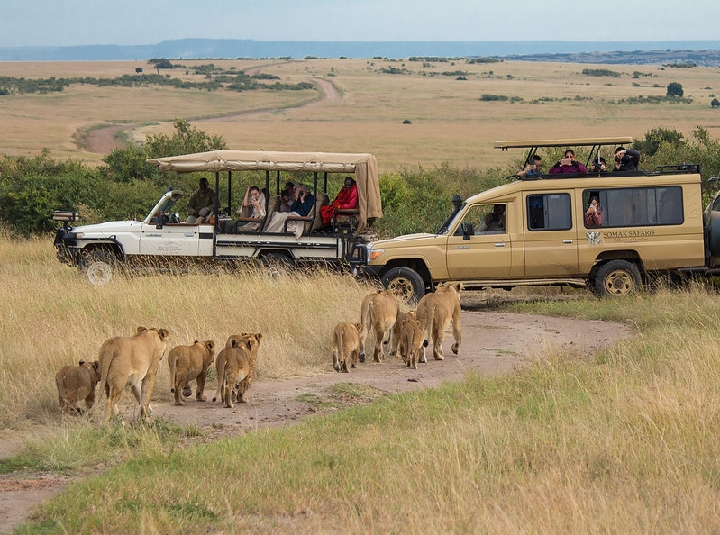 A safari is one of the best bucket list ideas for summer.