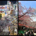 Japan Bucket List: 10 things to do in Japan before you die