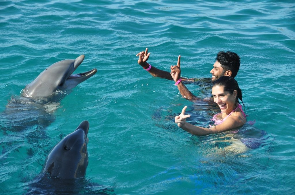 Swim with the dolphins – for an unforgettable activity on the bucket list for couples.