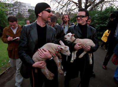 One of the weird and strange laws in Ireland is about sheep.